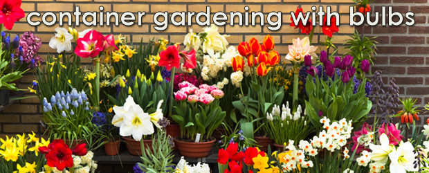 Container Gardening with Bulbs The Rock Pile Garden Center