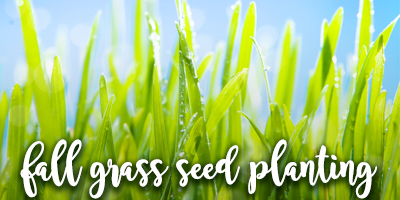 fall-grass-seed-planting