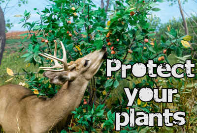 Protect Your Plants Against Deer The Rock Pile Garden Center